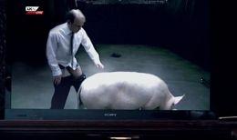 Black-Mirror-pig-350144